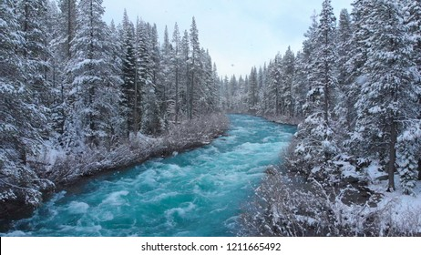 AERIAL: Whitewater rapids rush through the large coniferous forest on snowy day. Picturesque view of the emerald colored mountain river flowing through the American wilderness in the idyllic winter.