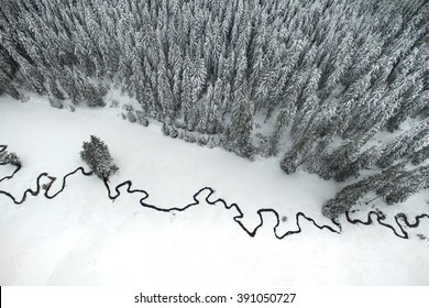 Aerial winter landscape of high pine trees and a little meandering stream.