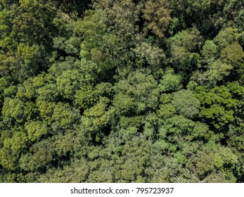 Aeriel view of green forest