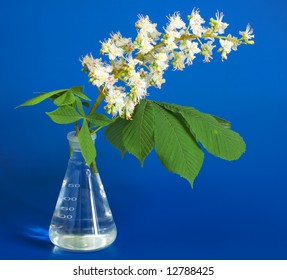 Aesculus hippocastanum (blossom of horse-chestnut tree) on blue in chemical flask