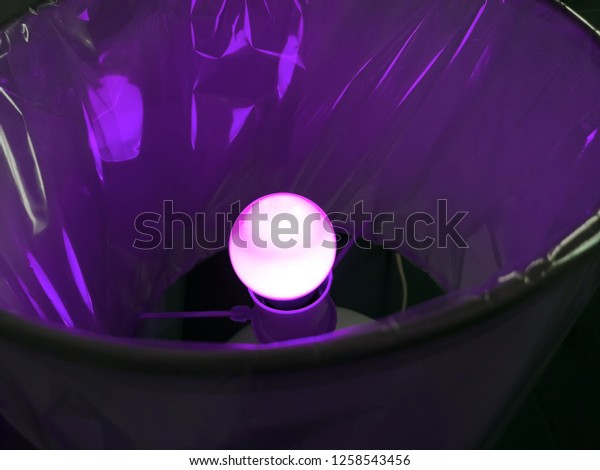 Aesthetic Purple Lights Stock Photo Edit Now 1258543456