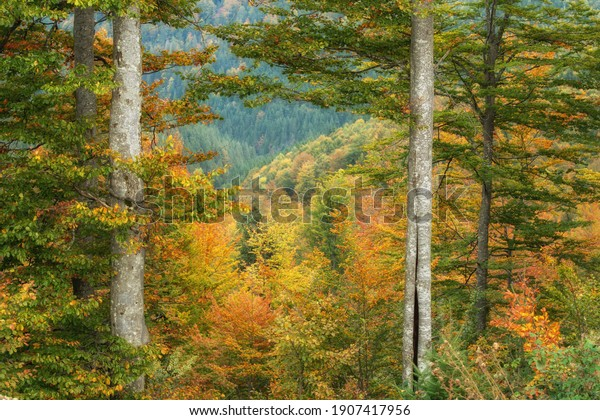 aesthetic-tree-autumn-warm-colors-600w-1
