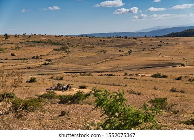 Afar Region, Ethiopia - January 03, 2019: Desert land with trees, bushes and some local people working on some grains in Afar Region, Ethiopia.