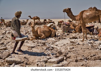 Afar Region, Ethiopia - January 03, 2019: Man with turban carrying salt packs in the desert in a salt mine, while the camels are resting on a hot day in Afar Region, Ethiopia.