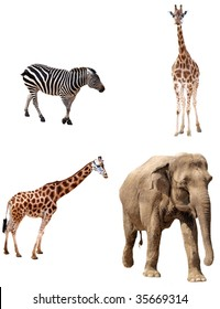 Africa animals collection