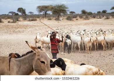 Africa, Kenya, Kenyan-Somali border -    Kenyan boy graze a flock of sheep- August 20, 2018,