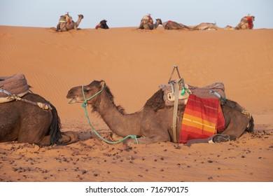 Africa, Morocco, Merzouga