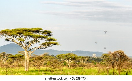 Africa savana with baloons in distance