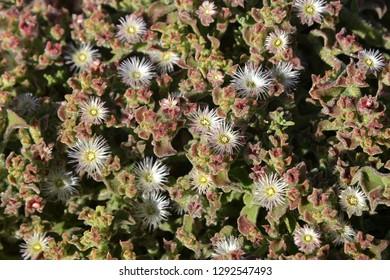 Africa, suculent plants. Sommer floral background.