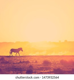 Africa sunset landscape with silhouetted Zebra in the dust of Botswana, Africa with retro style filter effect
