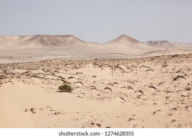 Africa, Western Sahara, Dakhla. Shrubs and hills looking out over a desert.
