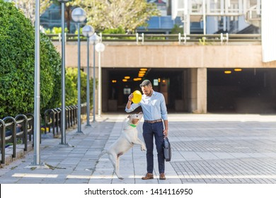 African American black young business man walking and playing with his labrador dog at his free time in the office. concept of love for animals