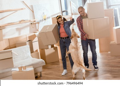african american couple holding cardboard boxes and playing with labrador dog in new apartment