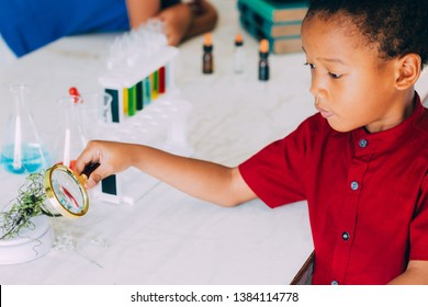 African American elementary school boy using magnifier to test green plant for scientific proof in science classroom - biology and ecology concept.