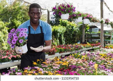 African American florist working in sunny greenhouse full of flowers