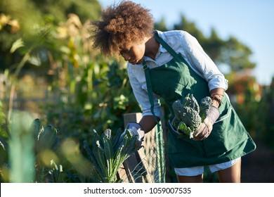 african american woman tending to communal garden