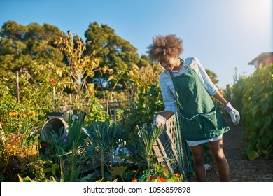 african american woman tending to the kale in a community garden