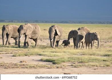 The African animals. Kenya.