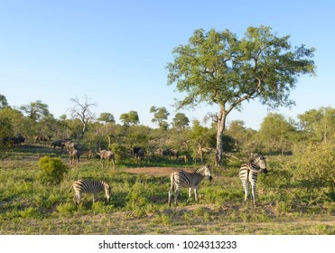 African animals in the wild