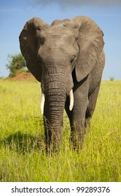 african animals/pensive elephant/