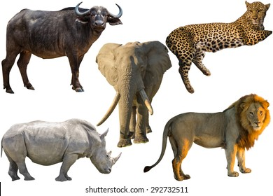 African Big Five animals, Buffalo, Elephant, Leopard, White Rhino and Lion isolated on pure white background