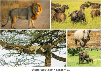 African Big Five animals collage, Buffalo, Elephant, Leopard, Black Rhino and Lion in national parks and african reserves like Kruger, Etosha and the Serengeti.