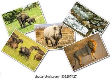 861fdcf54fb49 African Big Five animals collage, Buffalo, Elephant, Leopard, Black Rhino  and Lion