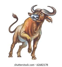 African buffalo, affalo or Cape buffalo
