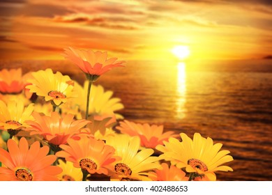African Daisies with Backdrop of Ocean Sunset