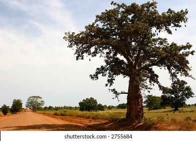 african dessert road