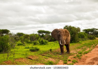African elephant with elephant baby in the wild in the savannah in africa. Elephants on the background of African flora