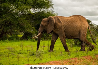 African elephant with elephant baby in the wild in the savannah in africa. Elephants on the background