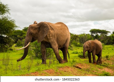 African elephant with elephant baby in the wild in the savannah in africa. Elephants on the background of African flora in Kenya national park