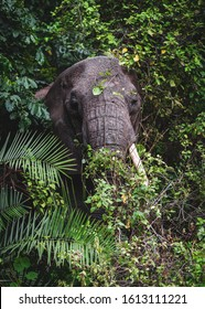 African elephant coming out of the jungle