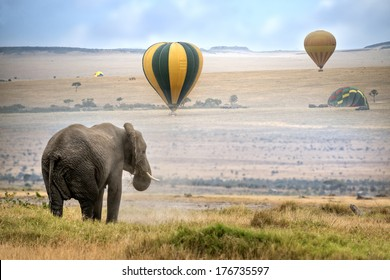 African elephant ,  foggy morning, hot air balloons landing on background,  Masai Mara National Reserve, Kenya