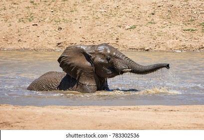 An African Elephant having a splash on a hot day in a watering hole in Namibia