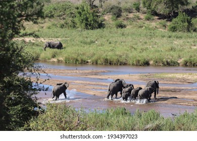 African elephant herd family with little babies walk and cross water in wild river bed within beautiful nature landscape on safari game in scenic sanctuary reserve Kruger National Park, South Africa.