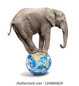 African elephant - Loxodonta africana balancing on a blue planet or globe. Ecology metaphor.