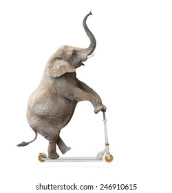 African elephant (Loxodonta africana) riding a push scooter.