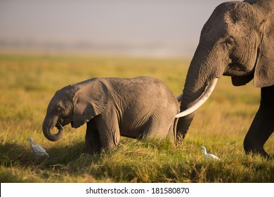 An African elephant mother and a baby elephant in late afternoon light, Amboseli National Park, Kenya.