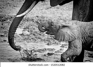 African elephant mother and baby water splashing