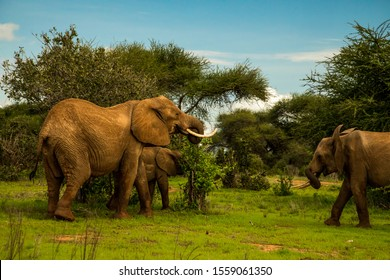African elephant  mother with the elephant baby in the wild in the savannah in africa.