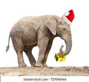African elephant with santa's cap delivering christmas gifts.
