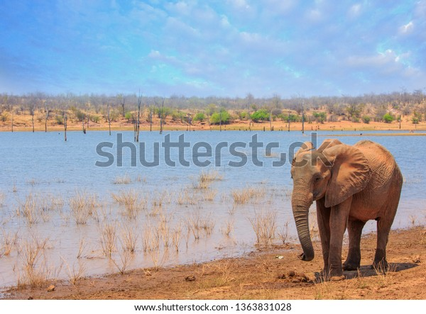 African Elephant standing next to Lake Kariba with a lakeside and bushveld background, against a light blue cloudy sky. Matusadona National Park, Zimbabwe