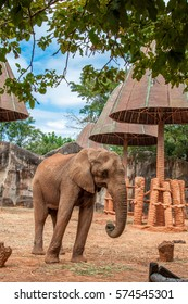 African elephant in the zoo