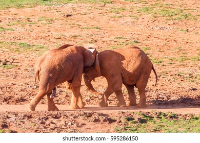 Big elephant penis