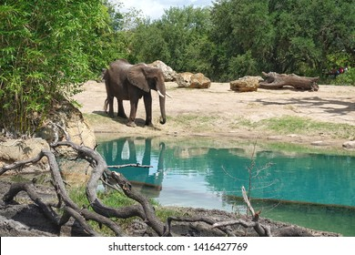 African elephants are elephants of the genus Loxodonta. The genus consists of two extant species: the African bush elephant, L. africana, and the smaller African forest elephant, L. cyclotis.