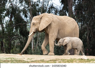 African elephants, kind loving tender relationship, mother and child, cute tiny baby elephant following mother, natural outdoors landscape