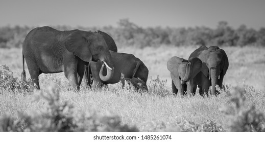 Matriarch Images, Stock Photos & Vectors | Shutterstock