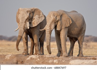 African Elephants, Nxai Pan National Park, Botswana